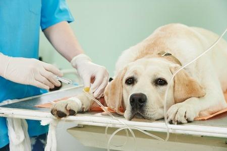 albuquerque pet surgery