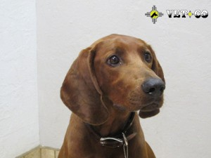 Vet-Co Veterinarian services for dogs