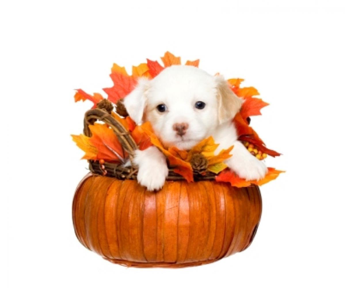Thanksgiving-dog » Albuquerque VetCo