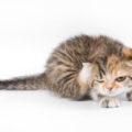 Permethrin cats