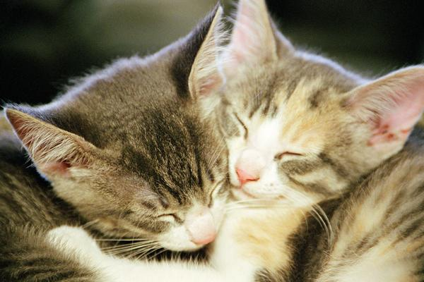Chlamydia In Cats Its Not An Std 187 Albuquerque Vetco