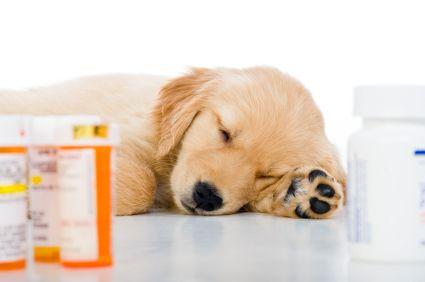 treatment of nephrogenic diabetes insipidus with hydrochlorothiazide and amiloride