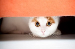 Cat_TrainingFearfulCat