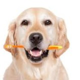 albuquerque pet dental health