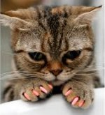 Soft Paws What They Are And Why You Want Them