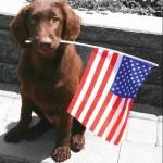 Pet Safety Memorial Day Albuquerque