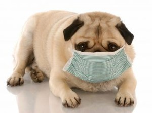 Can Antibiotics Make A Dog Loss Its Appetite