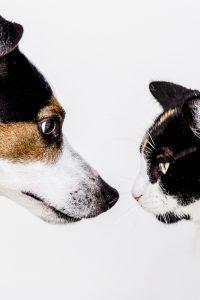 cat and dog health albuquerque