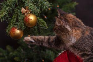albuquerque christmas tree safety