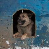 winter dog house albuquerque vet