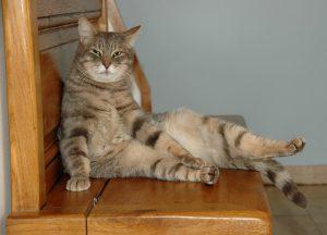 albuquerque cat veterinarian