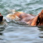 over exercise dogs albuquerque