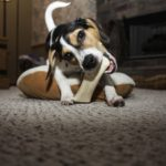 dog gnawing albuquerque
