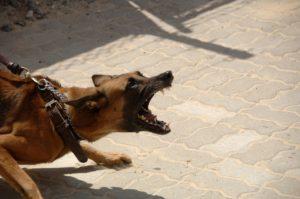 aggressive dog behavior new mexico