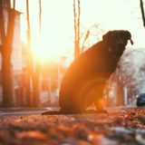 What To Do If Your Pet Is Hit By A Car