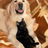 vomit vs regurgitation cat dog