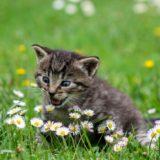 Kitten Basics - Ready to Own Your First Kitten!