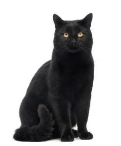 New Mexico Cat pet Health