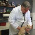 Vet-Co Cat vet services