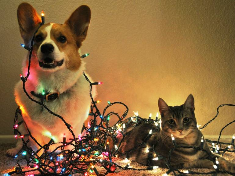 safe for christmas holiday pet safety