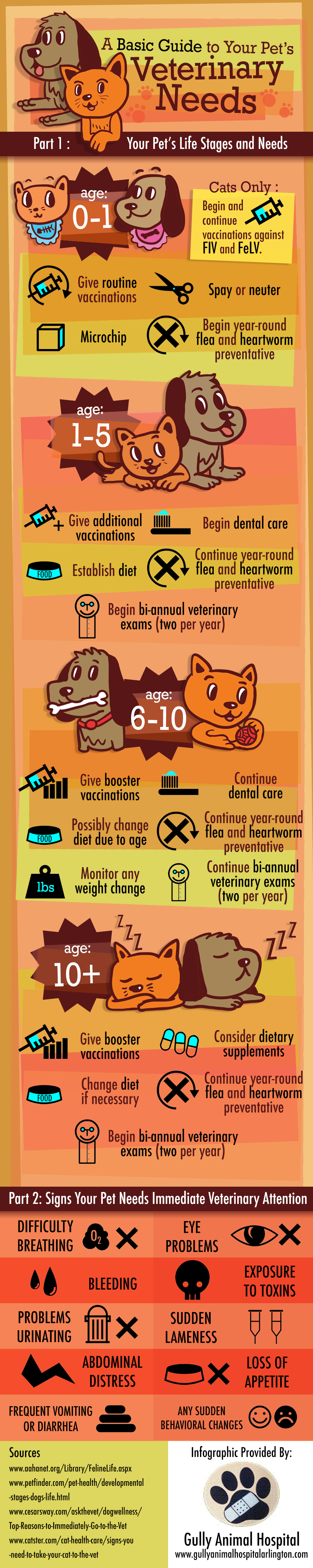 A Basic Guide to Your Pet's Veterinary Needs