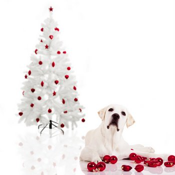 christmas tree pet safety