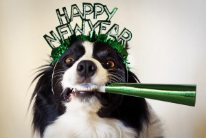 holiday-new-years-dog2