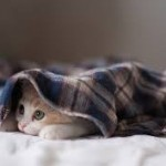 kitten albuquerque