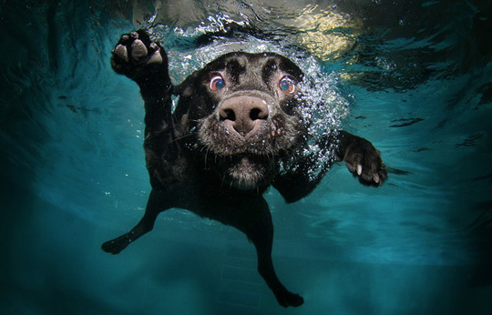 Shot To Give Dogs That Swim In Water