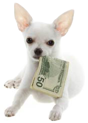 dog-money-mouth