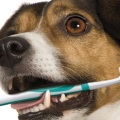 Pet Dental Health Month is Save You Money Month too!