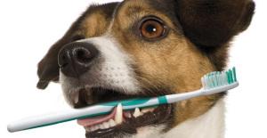 pet_dental_month
