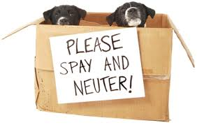 low cost spay neuter albuquerque