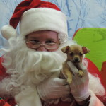 Pet Photos with Santa Albuqerque