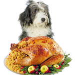 Albuquerque Pet Thanksgiving