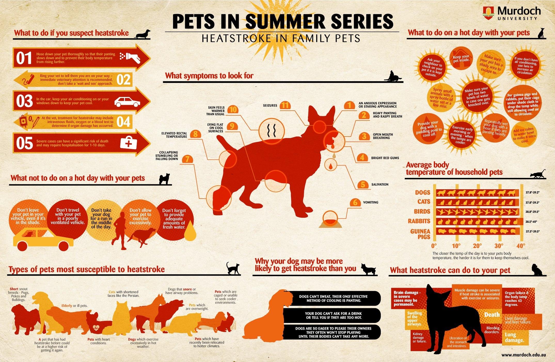 heatstroke pets albuquerque