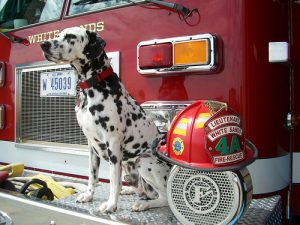 fire safety dogs