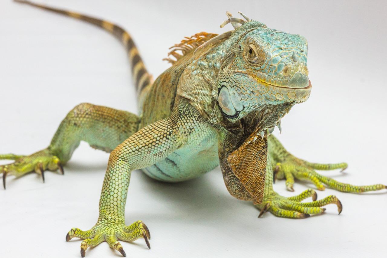 national reptile awareness day albuquerque vetco