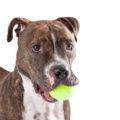 DIY dog toys albuquerque
