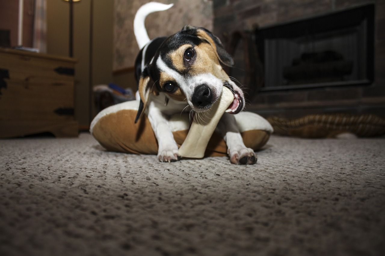 Dealing with a Dog That Chews Too Much » Albuquerque VetCo