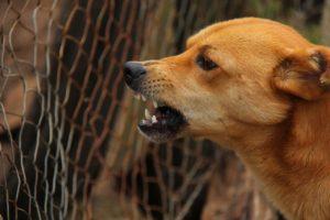 albuquerque aggressive dog