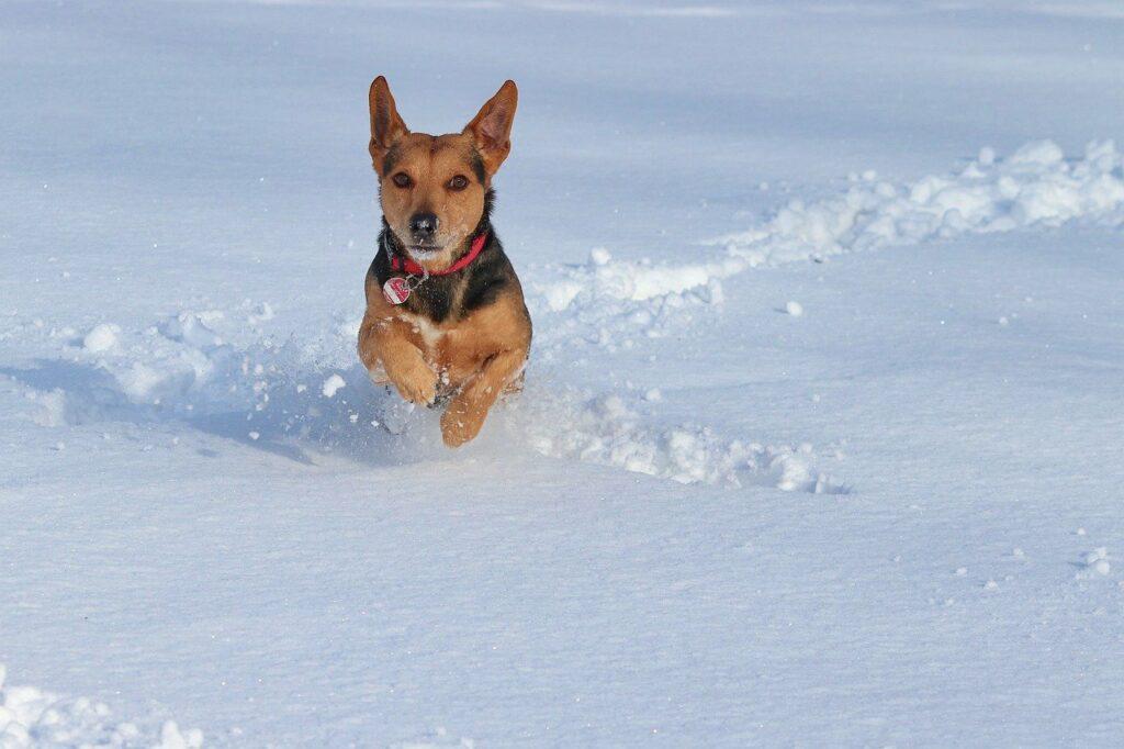 snow dog albuquerque